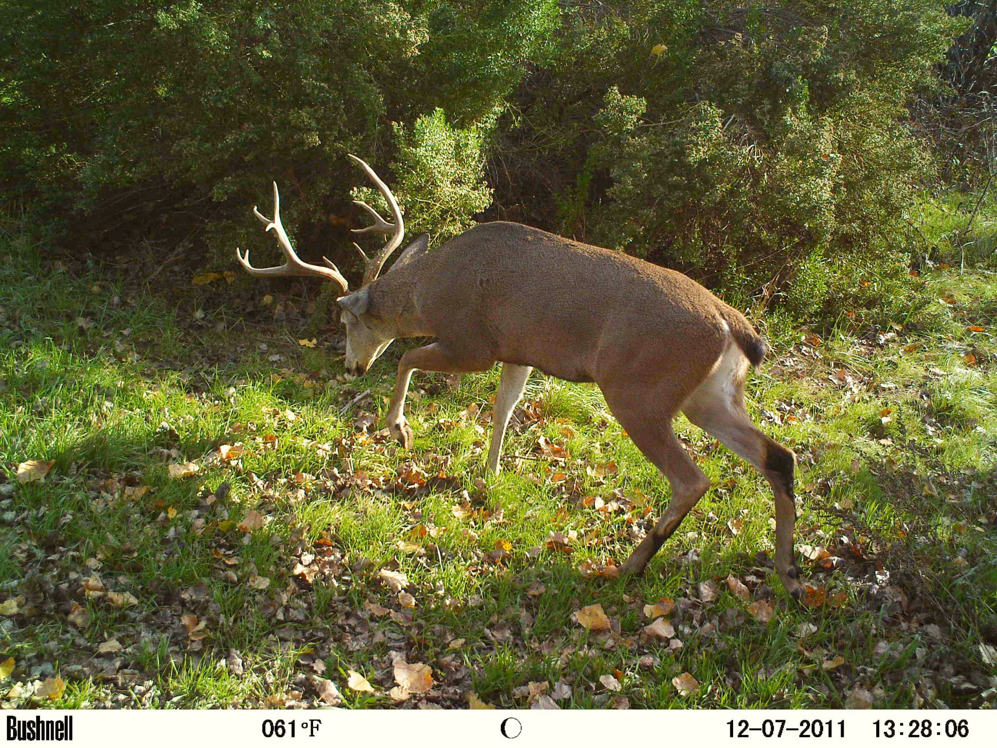 6 Tips and Tricks When Using a Game and Trail Camera 1
