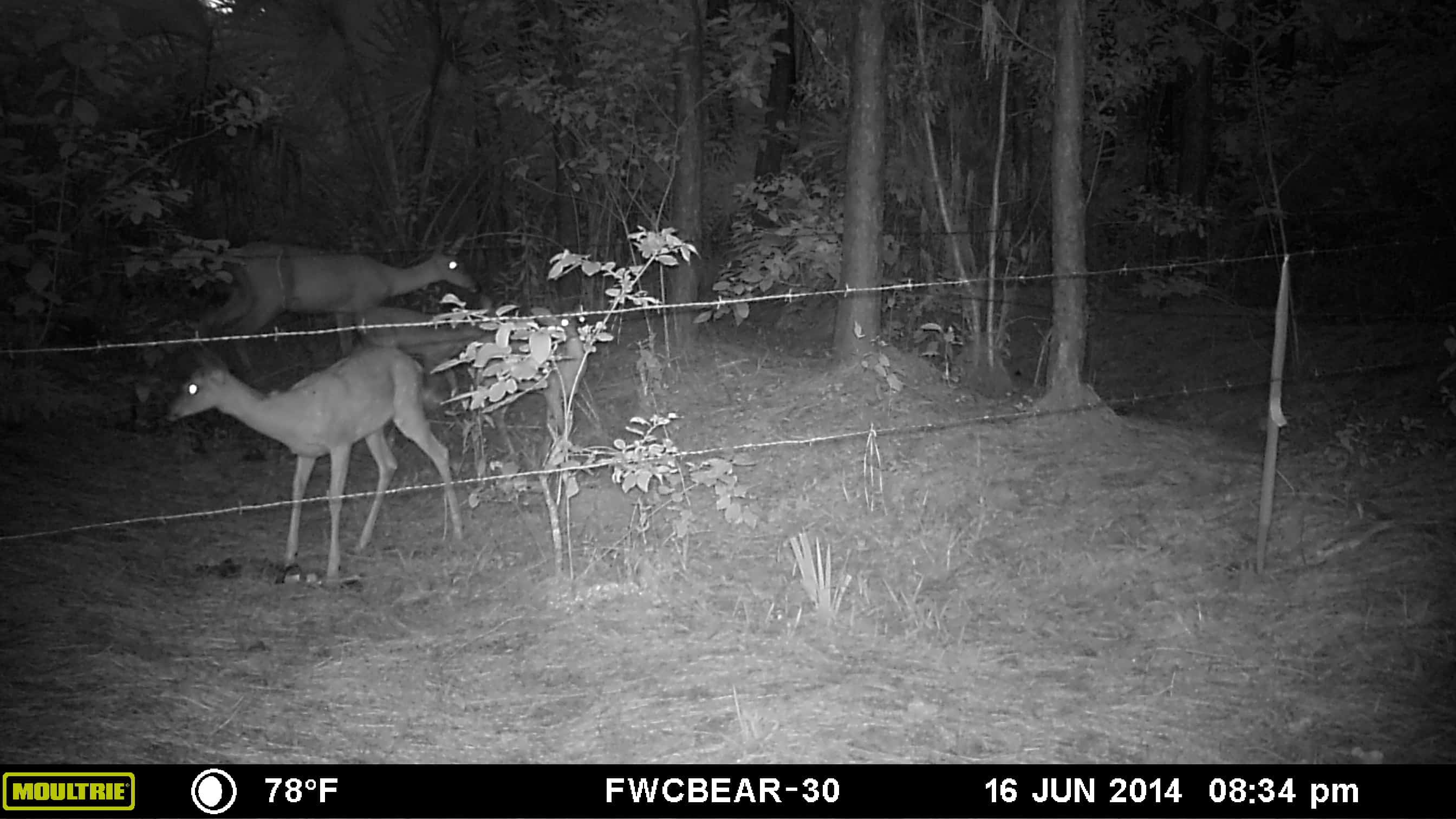 6 Tips and Tricks When Using a Game and Trail Camera 2