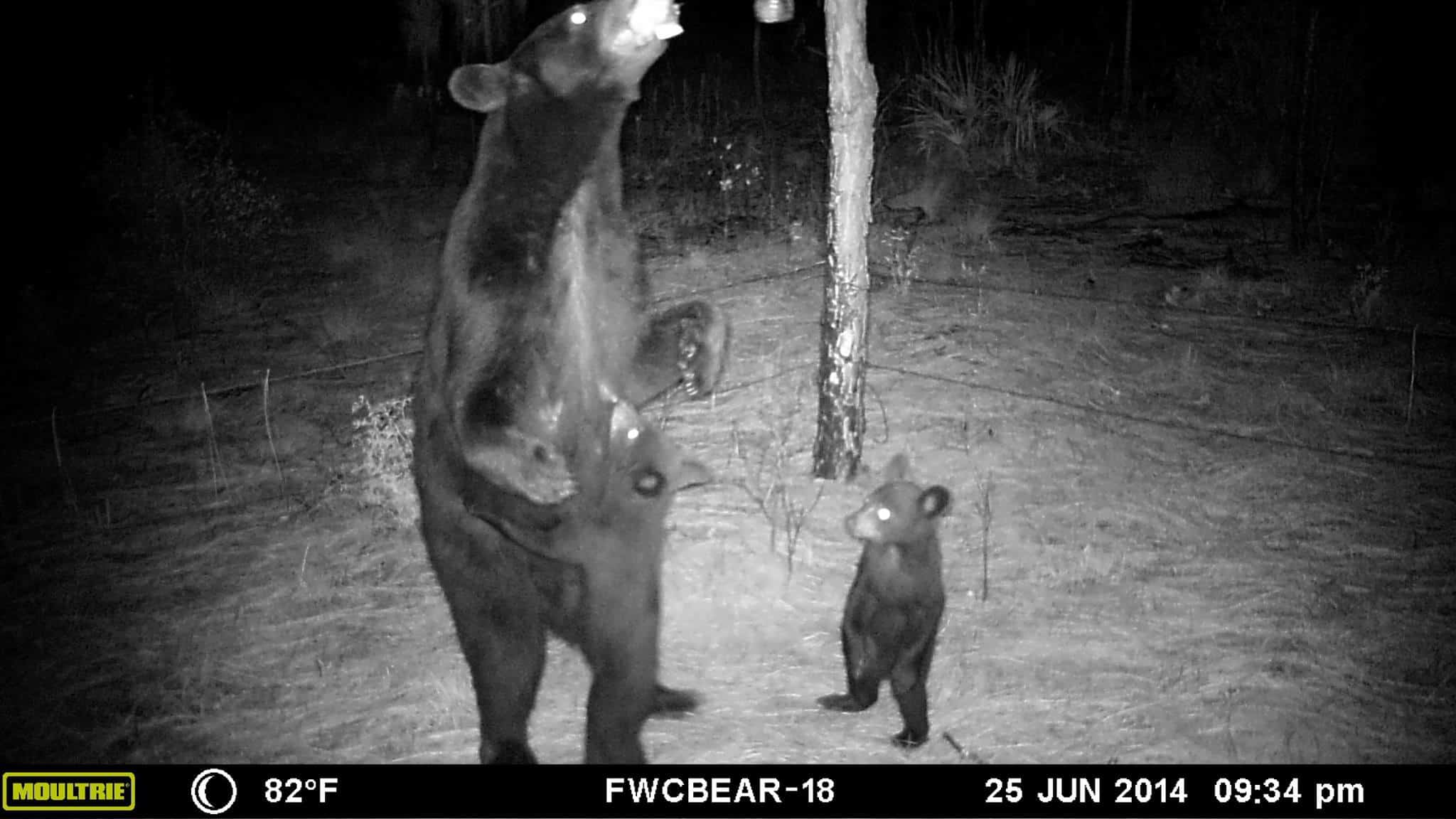 7 Trail Camera Myths You Should Stop Believing 2