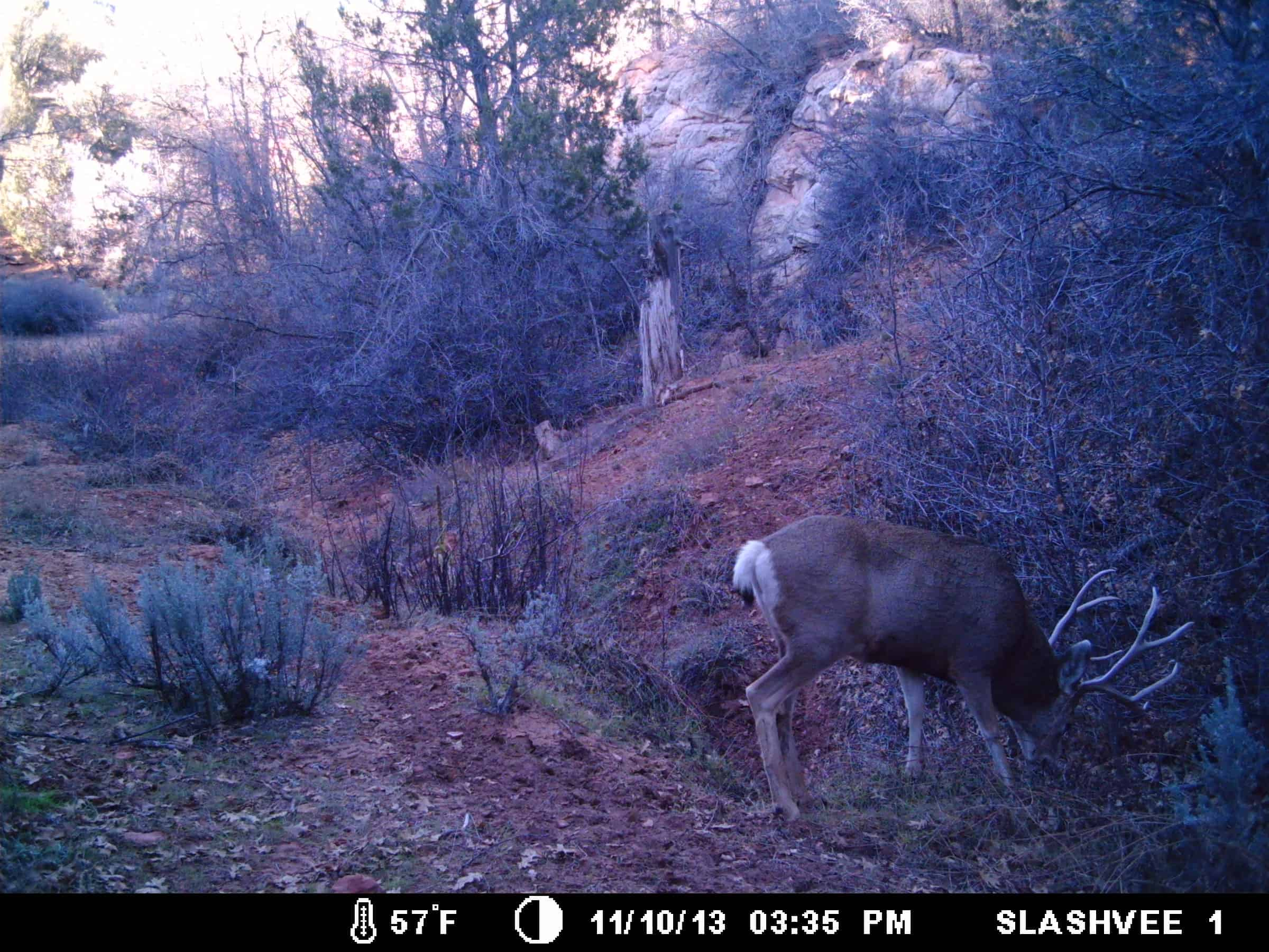 7 Trail Camera Myths You Should Stop Believing 3