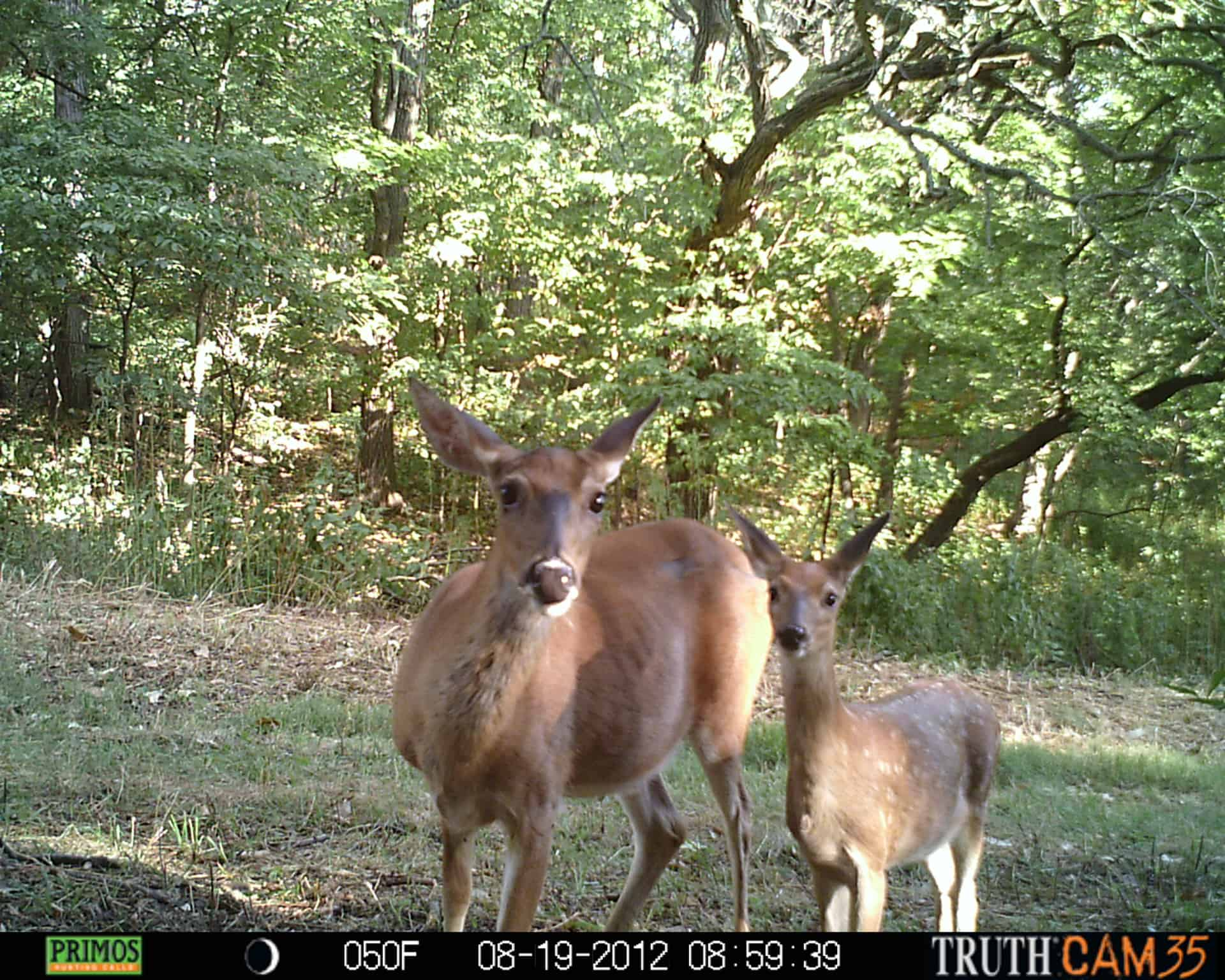 How Does A Game Trail Camera Work 1