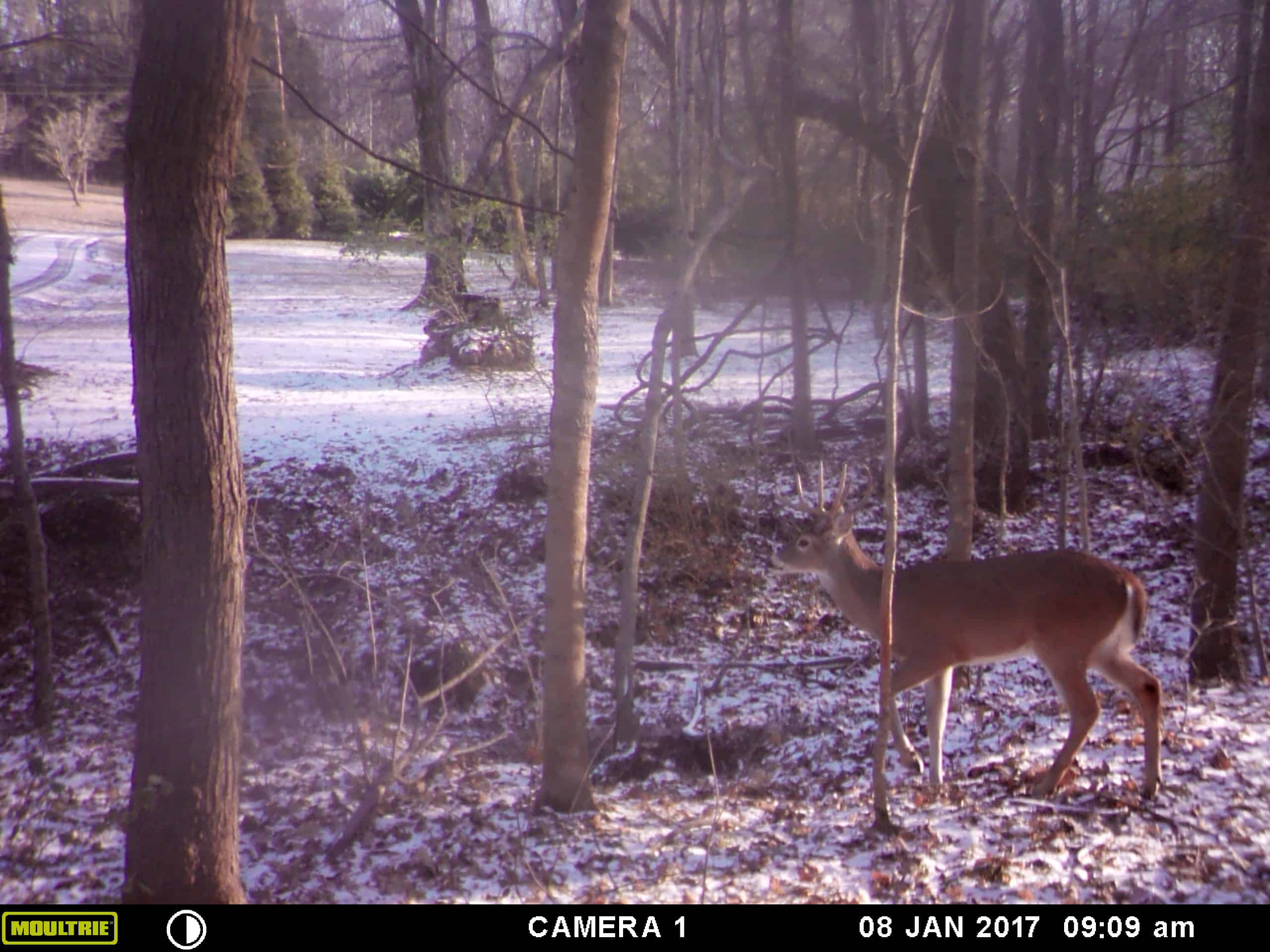 How Does A Game Trail Camera Work 2