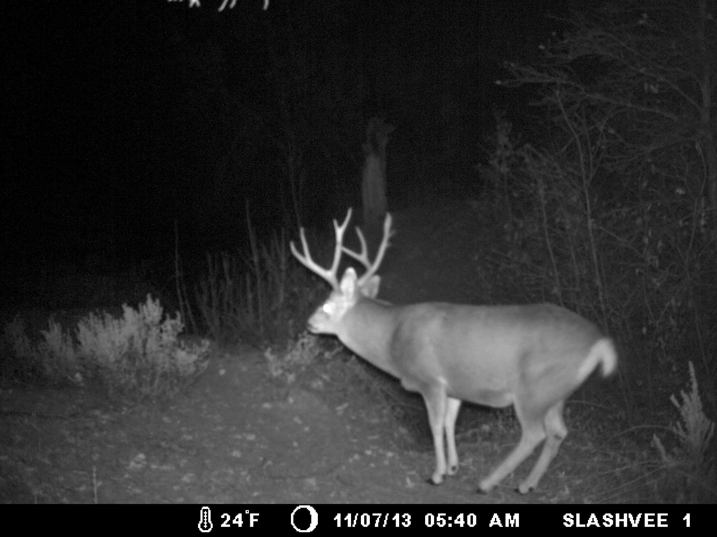 How Does A Game Trail Camera Work 3
