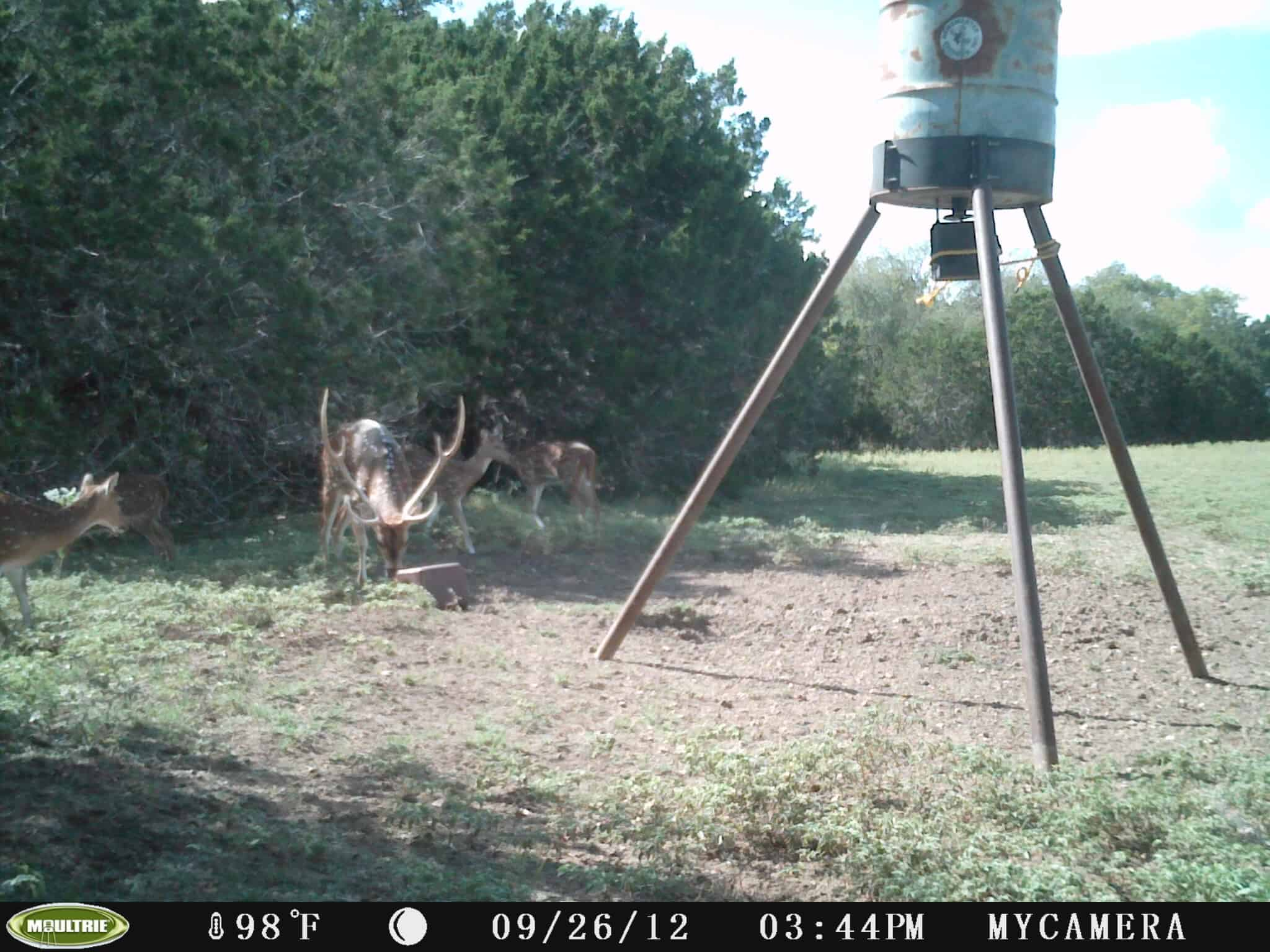 How To Use A Game Trail Camera For Security 1