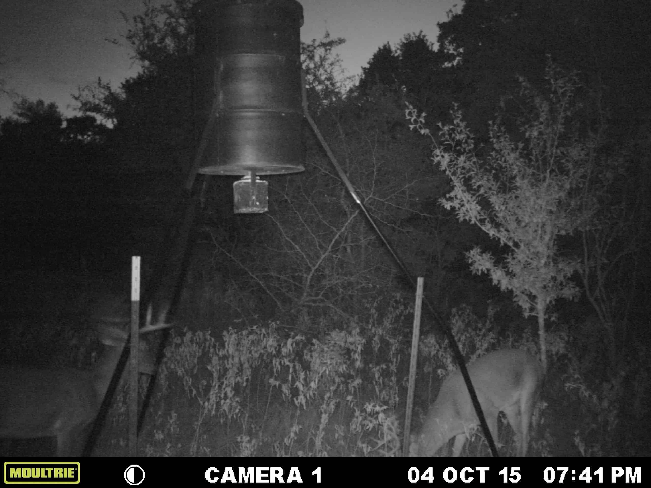 How To Use A Game Trail Camera For Security 2