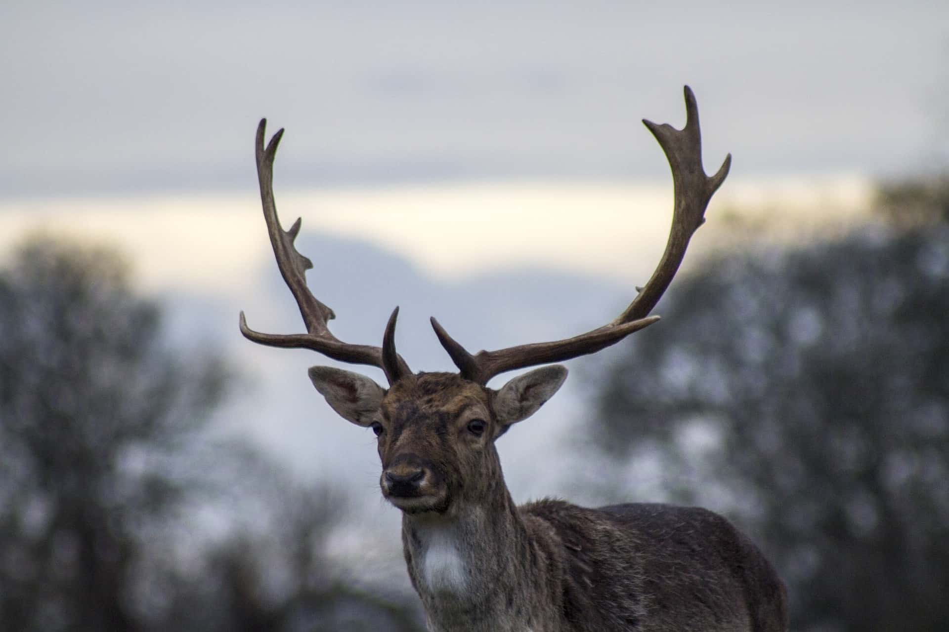 Different Uses of Trail Camera - Deer Hunting