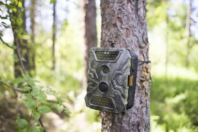 What is a trail camera - Game Camera World
