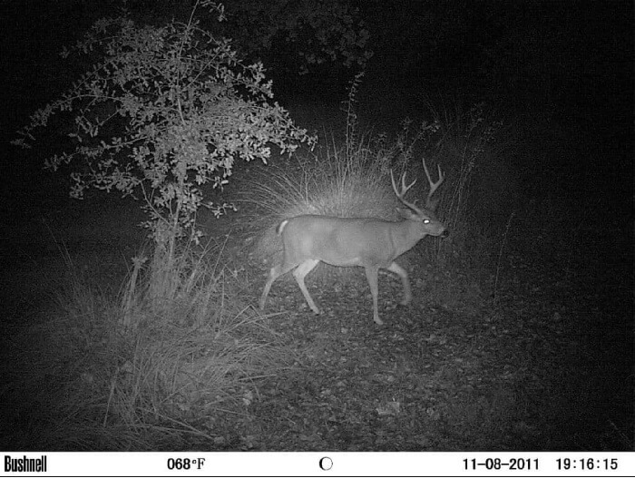 Night Picture Quality - Game Camera World