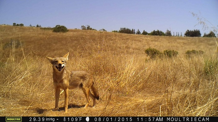 Trail Camera Picture Quality - Game Camera World